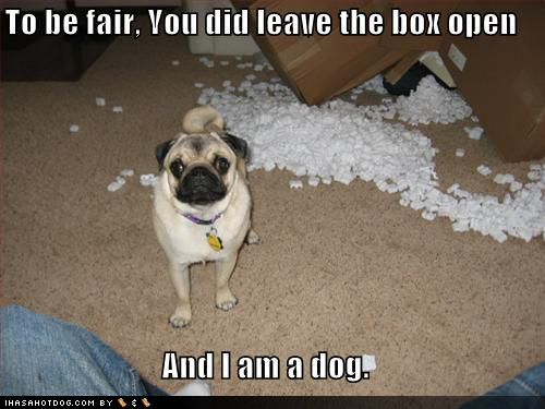 funny-dog-pictures-pug-destroys-packing-peanuts