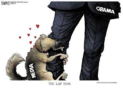 Lap dog media