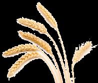 wheat-stalk good