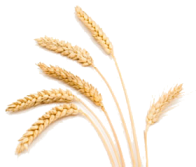 wheat-stalk good