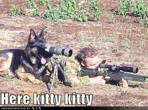funny-dog-pictures-dog-hunts-the-ca