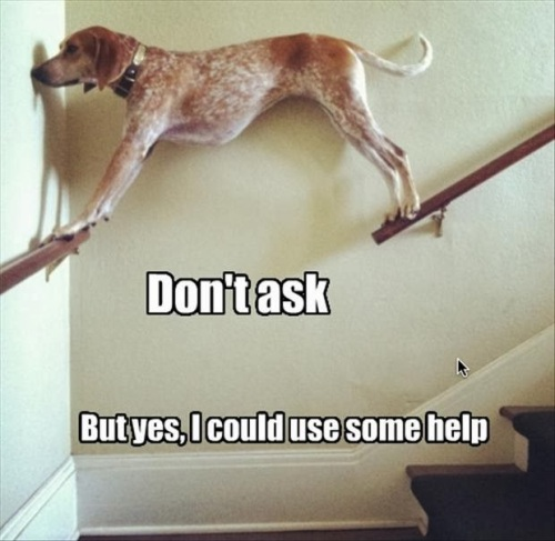 funny-dogs-002