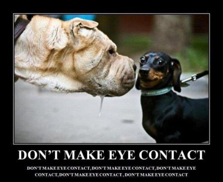 funny_dog_quotes_with_pictures